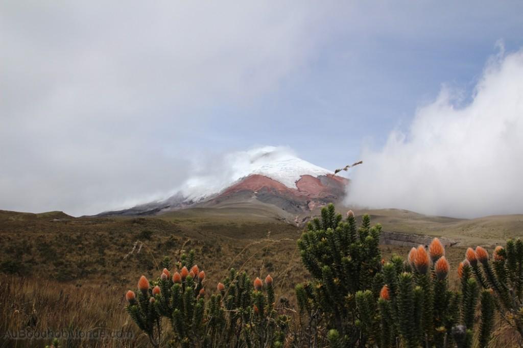 Equateur - Cotopaxi et fleurs anti-paludisme