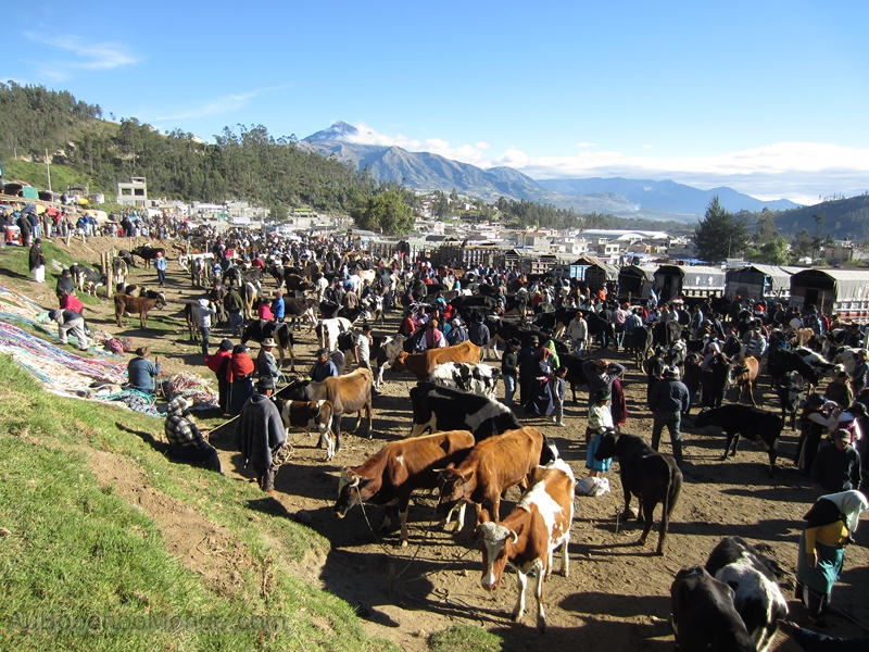Equateur - Otavalo animal market