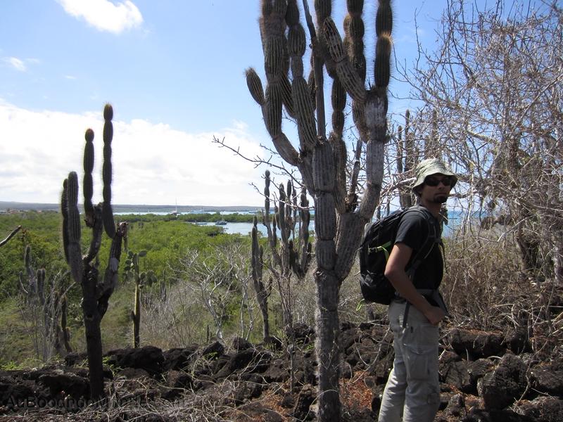 Galapagos pas cher - Cactus 2