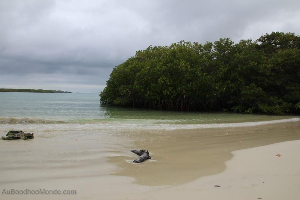 Galapagos - Plage Tortuga Bay