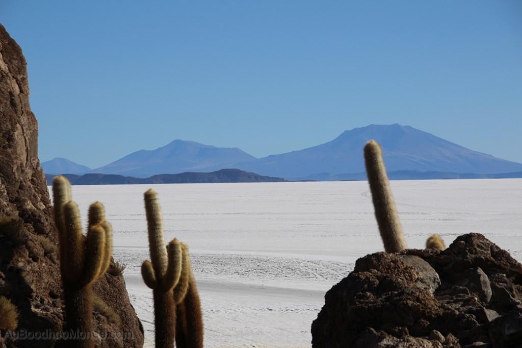 Bolivie - Isla Pescado - Incahuasi