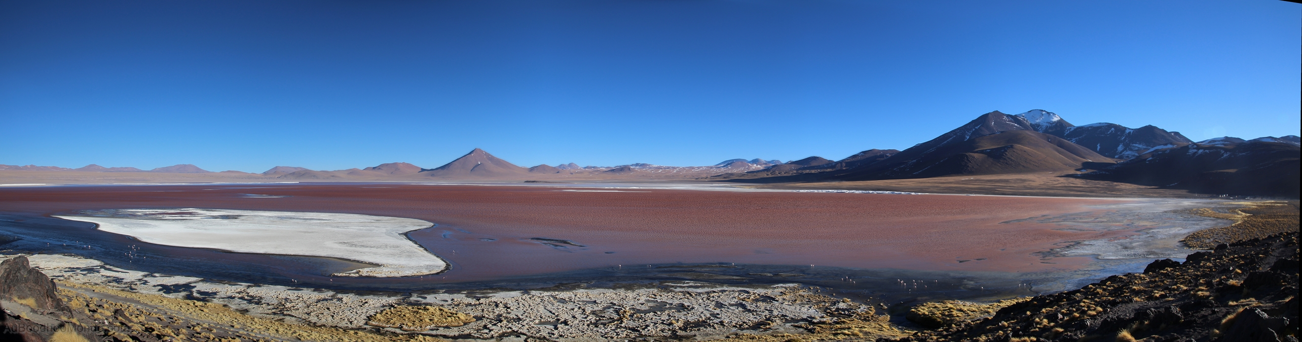 Bolivie - Laguna colorada Sud Lipez