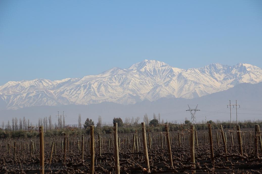 Argentine - Mendoza - Vignes
