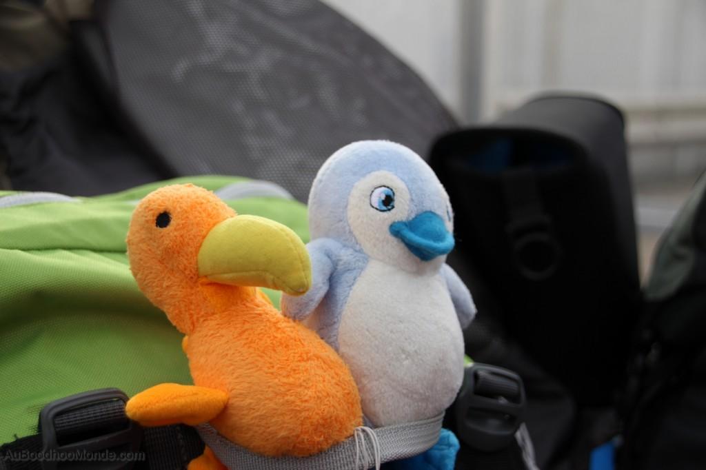 Auboodhoomonde - Dodo Moris - Canada Pomelo