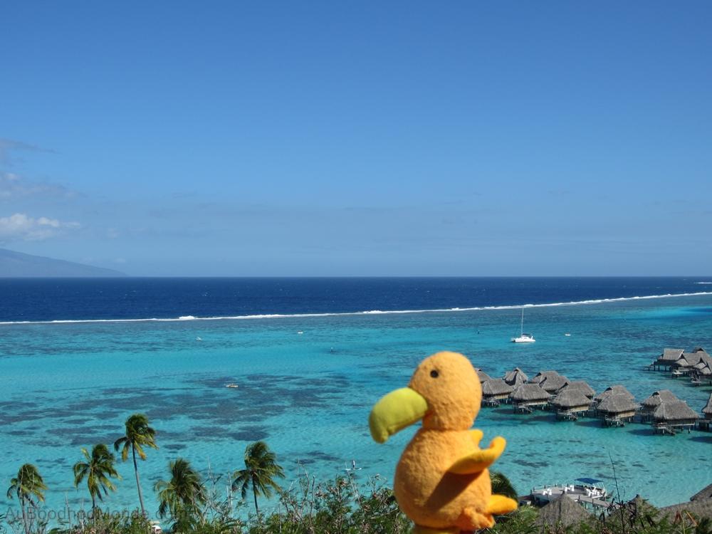 Auboodhoomonde - Dodo Moris - Moorea et Tahiti