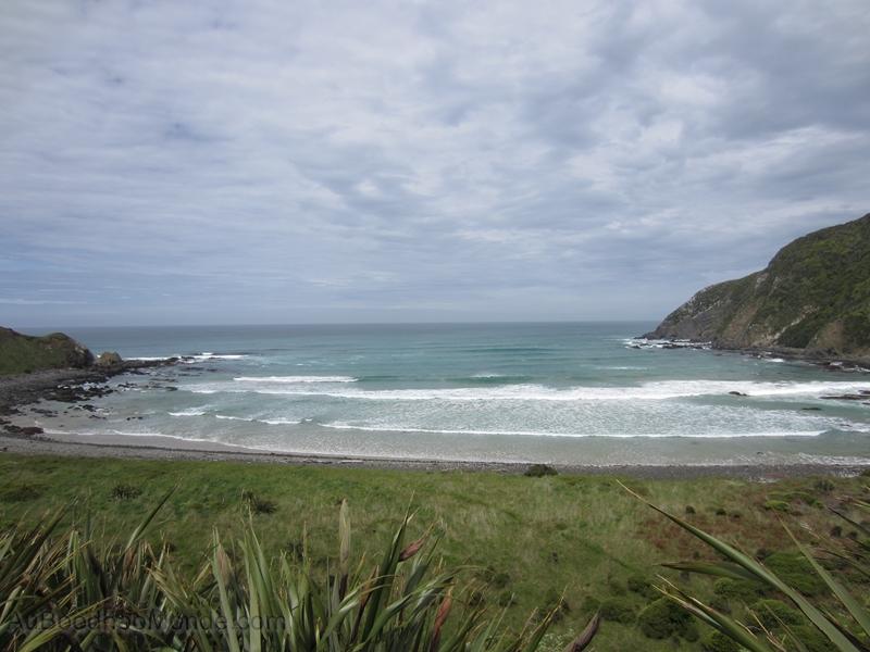 Nouvelle-Zelande - Les Catlins - Roaring Bay