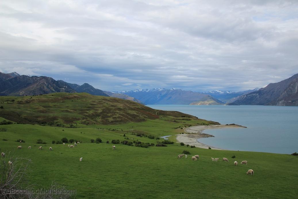 Nouvelle-Zelande -  Wanaka lake