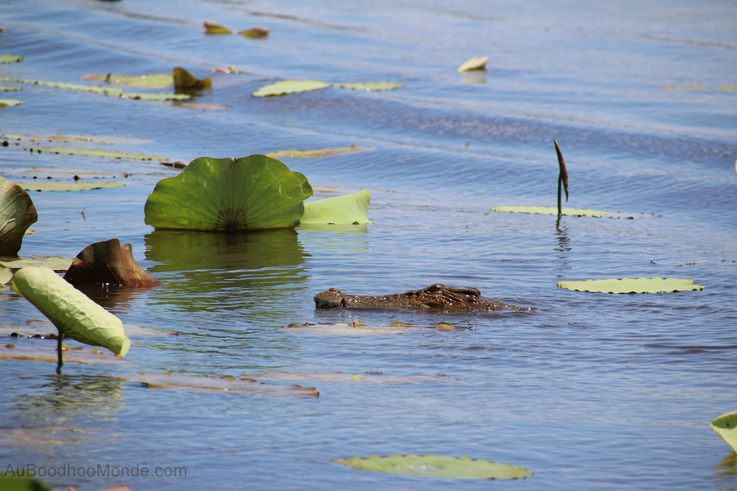 Australie - Crocodiles