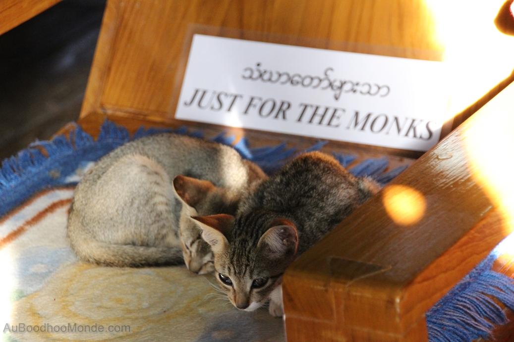 Myanmar - chats sauteurs