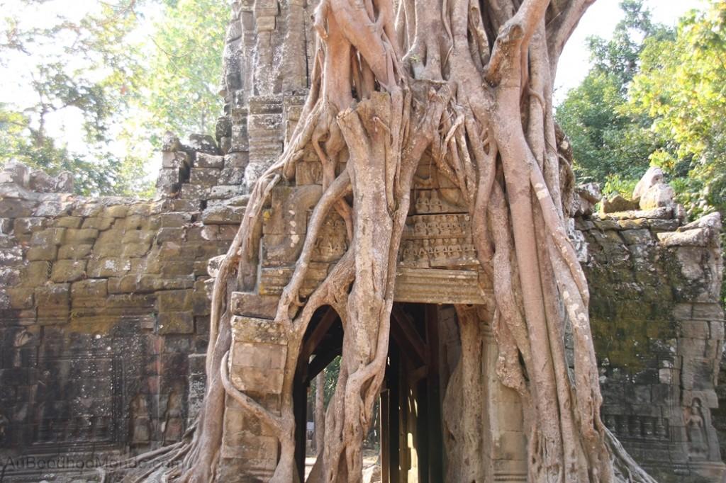 Cambodge - Angkor - Ta Som Arbre