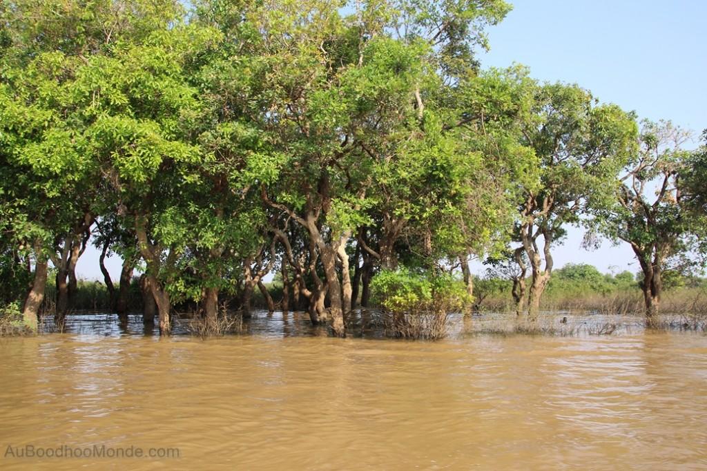 Cambodge - Angkor Kampong Phluk foret inondee