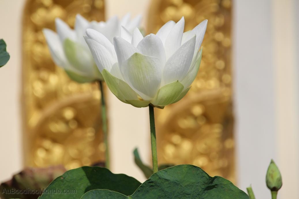 Cambodge - Phnom Penh - Palais royal - Jardin