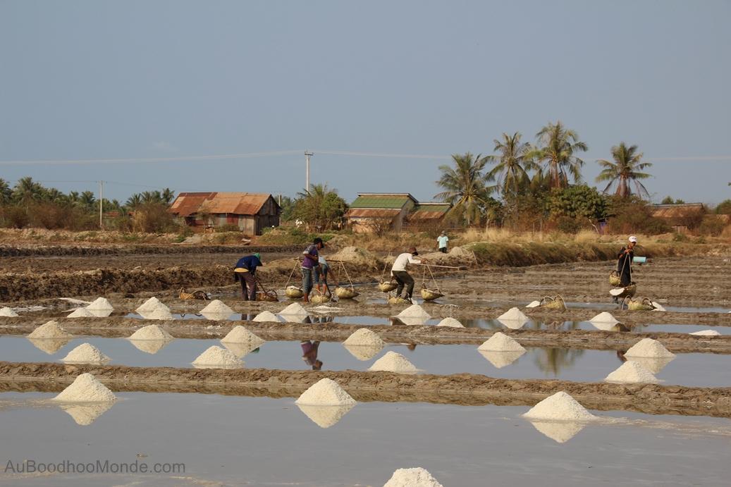Cambodge - Recolte sel