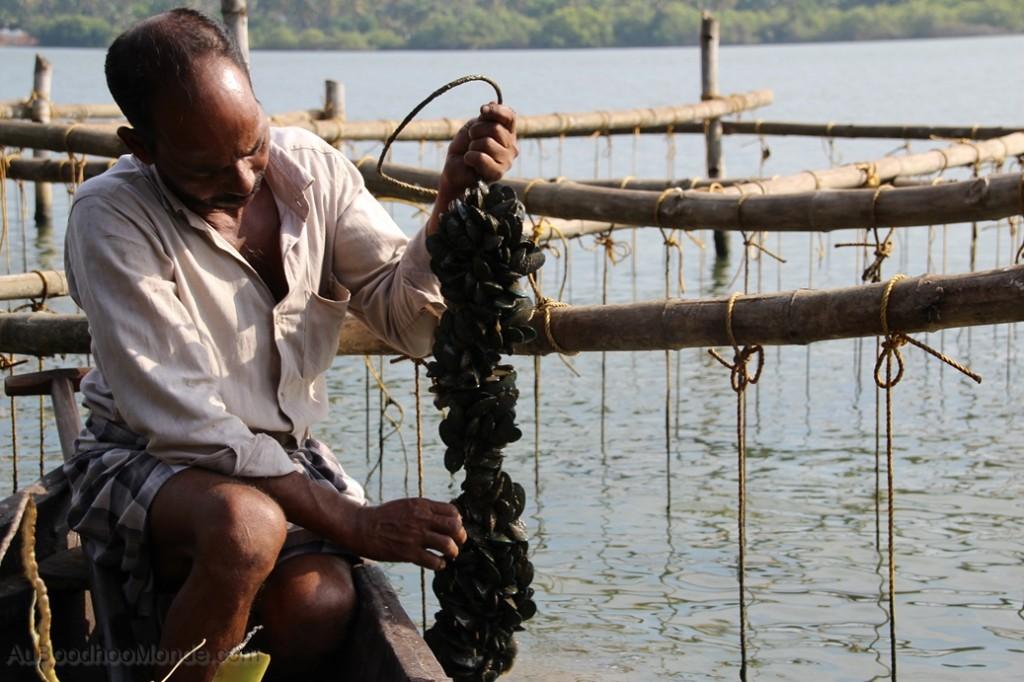 Inde - Valiyaparamba backwaters