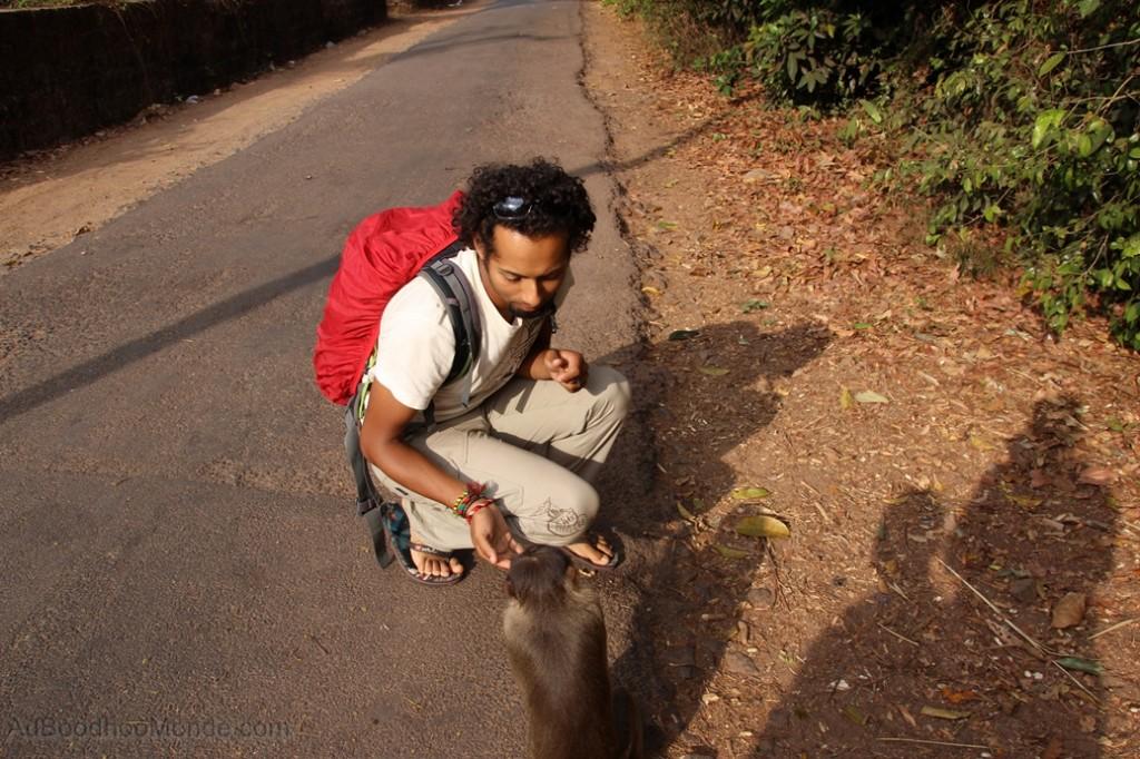 AuBoodhooMonde - Kerala animaux singe
