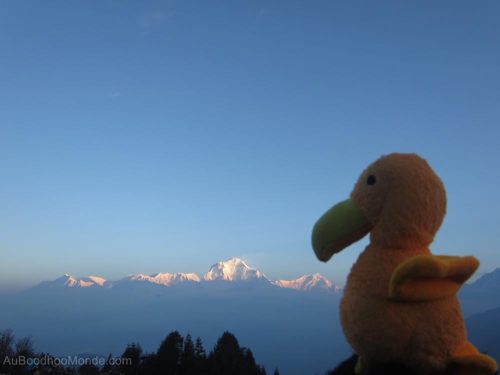 Auboodhoomonde - Dodo Moris - Himalaya Daulaghiri