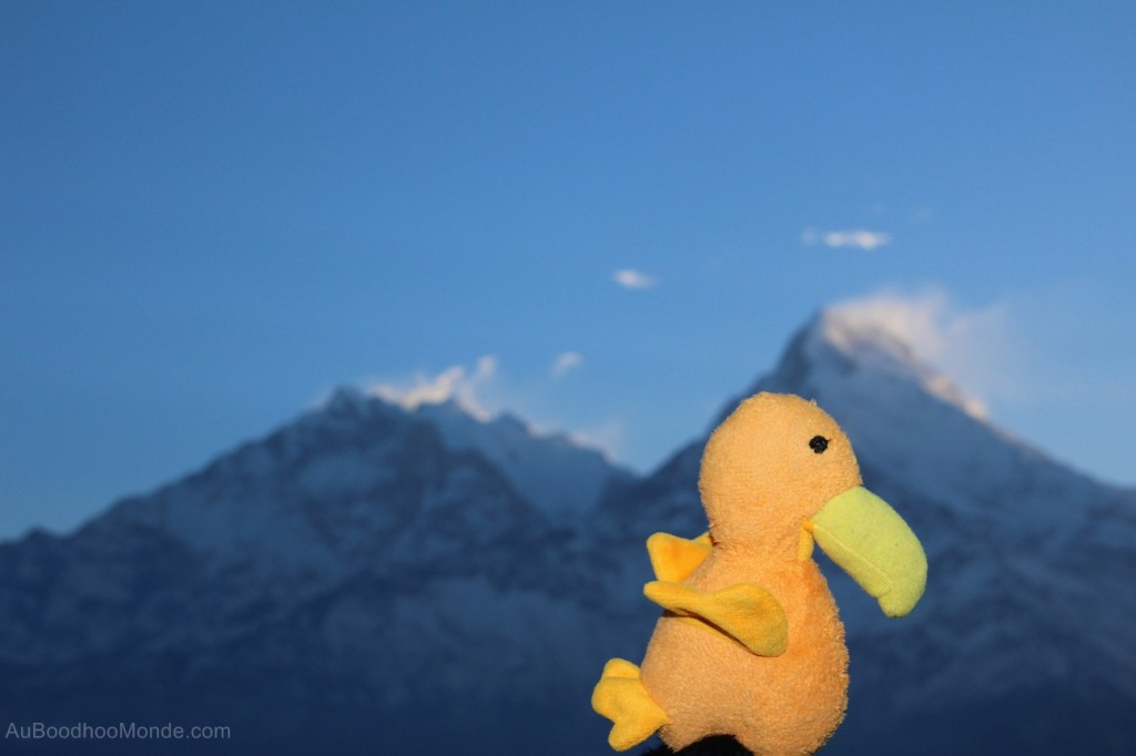 Auboodhoomonde - Dodo Moris - Himalaya annapurna South