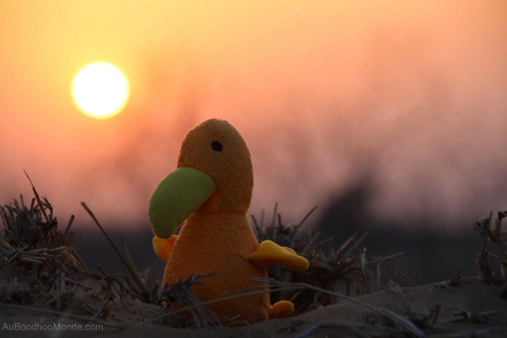 Auboodhoomonde - Dodo Moris - Inde Rajasthan