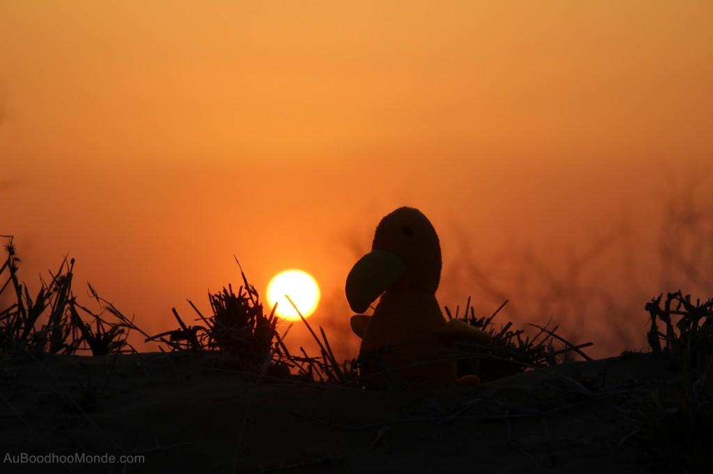 Auboodhoomonde - Dodo Moris - Inde desert du Thar