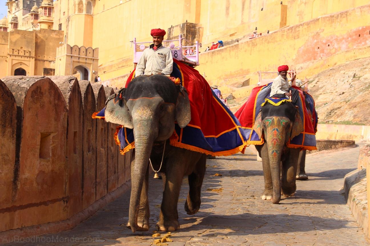 Inde - Rajasthan - Ambert Fort - Elephant