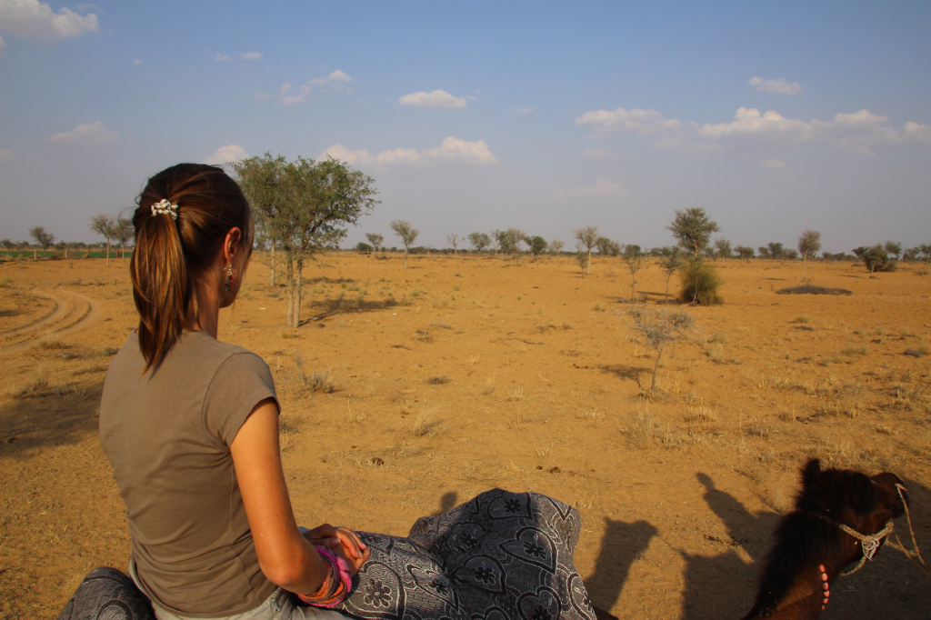 Inde - Thar paysage desert