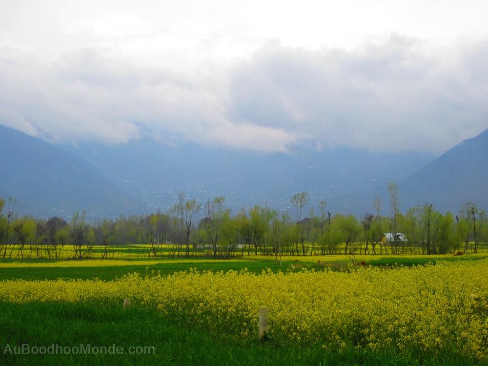 Kashmir - campagne